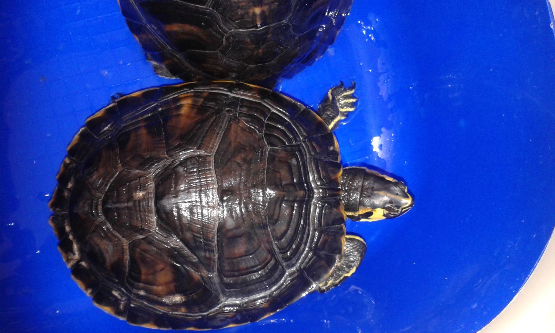 Quel âge à cette tortue ?