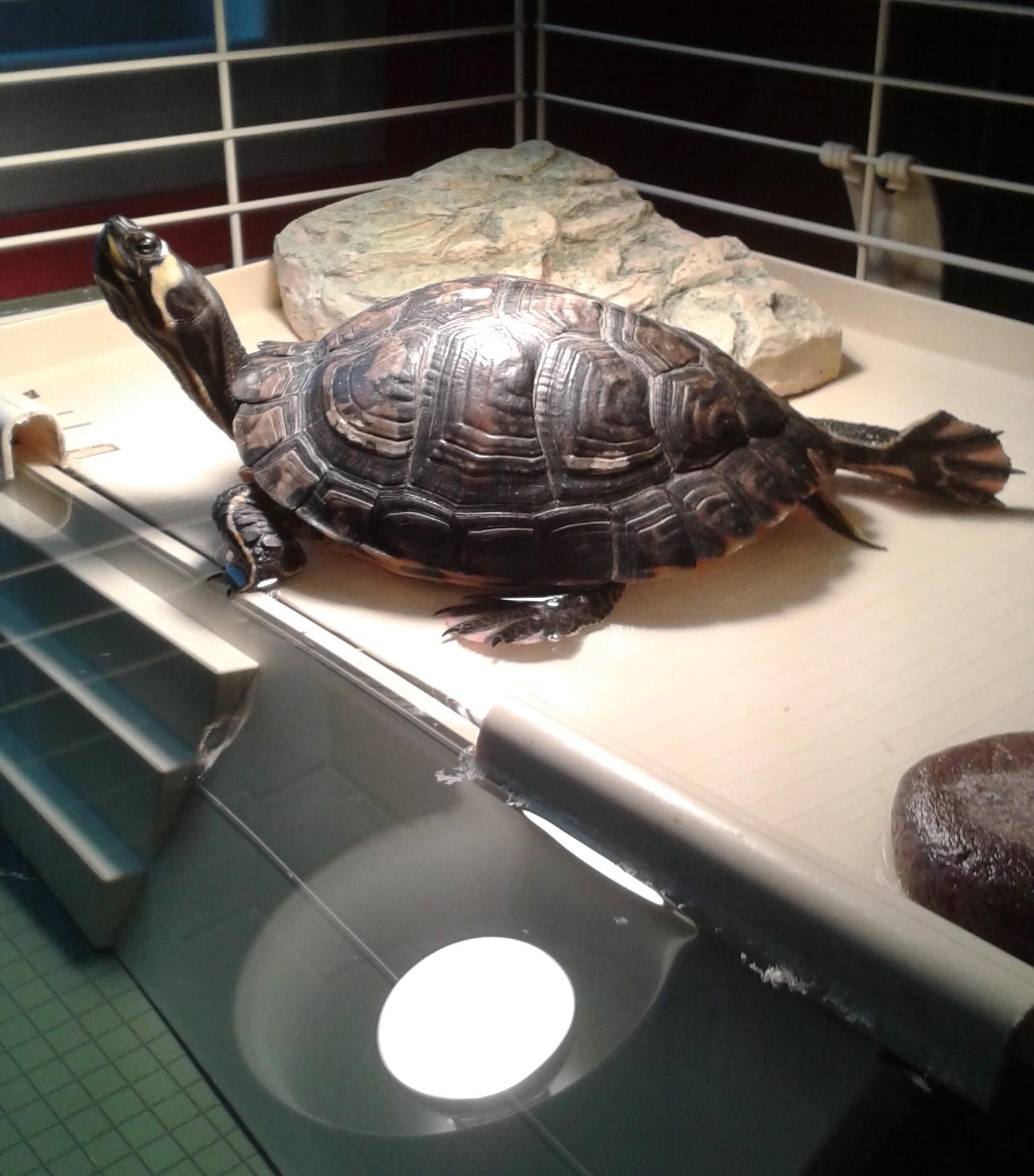 Aquaterrarium Pour Tortue D Eau