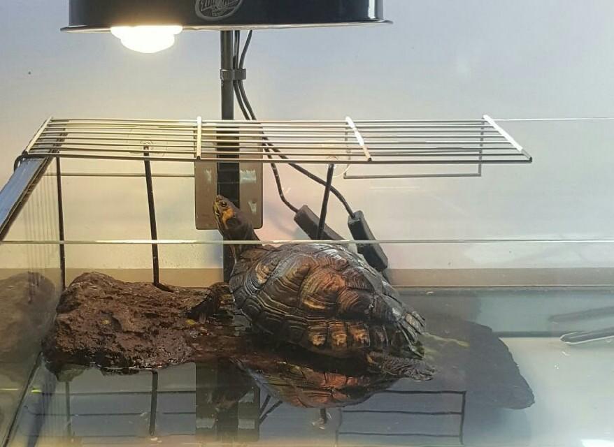 Aquaterrarium pour tortue d 39 eau for Avoir une tortue a la maison
